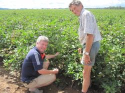 Logging Water Potential of Cotton