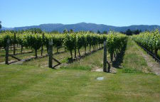 Irrigation and Viticulture