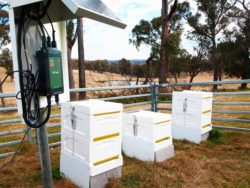Bee Hives and ICT Telemetry Hub